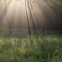 "photo ""Rays penetrating the fog"""
