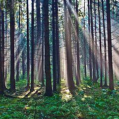 """фото """"Утро в лесу"""""""