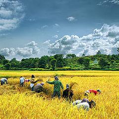 """photo """"Harvest"""""""