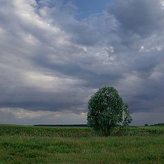 """фото """"Одинокое дерево"""""""