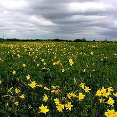 """фото """"В поле летом."""""""