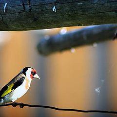 """photo """"bird"""""""