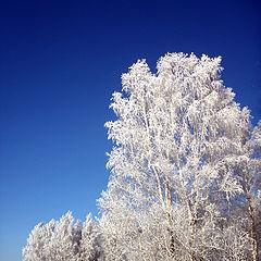 """фото """"Зимнее."""""""