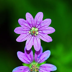 "photo ""Flower Macro"""