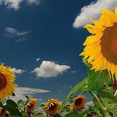 "photo ""Summer Sun"""