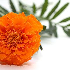 """фото """"Оранжевый бутон"""""""