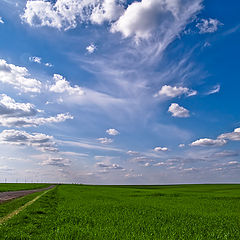 """фото """"The Sky, the Road  and the Corn field"""""""