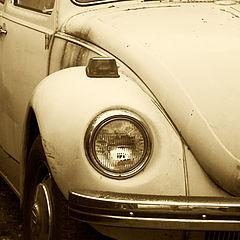 """photo """"Bug"""""""