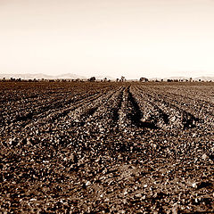 "фото ""Rows"""