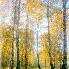 "фото ""Моя Осень."""