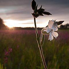 "фото ""Одинокий белый цветок"""