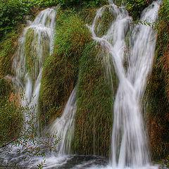 """фото """"Трава и вода"""""""