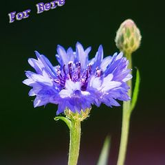 "photo ""For Bere"""
