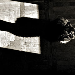 "photo ""shadow and her cat"""