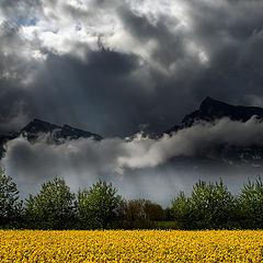 "photo ""Yellow field"""