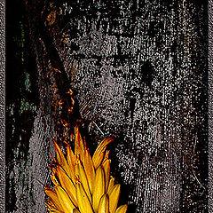 """фото """"Yellow thing at night"""""""