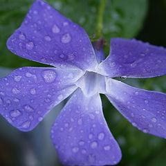 """фото """"Purple Beauty"""""""