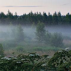 """фото """"*** (предрассветная с туманом и борщевиком)"""""""