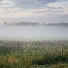"""фото """"Утренняя с туманом"""""""