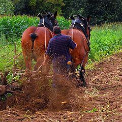 """фото """"the Potato harvest"""""""