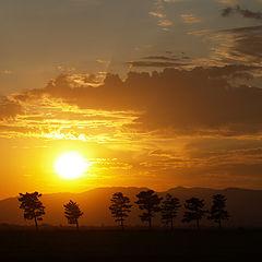 """фото """"Treeline-Sunset"""""""