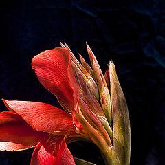"фото ""Marguerite's shine"""