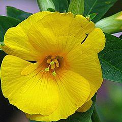 """photo """"Wild Flower"""""""