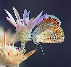 """photo """"Butterfly"""""""