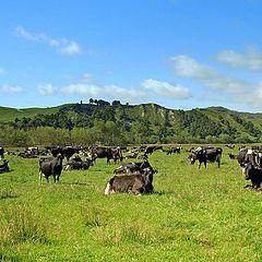 "photo ""Pastoral Scene.NZ."""