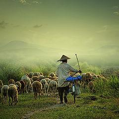 """photo """"Shepherd"""""""