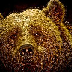 "photo ""Brown Bear"""