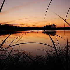 """фото """"Закат на фоне травы"""""""
