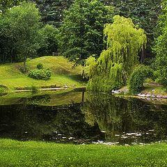 "фото ""Тишина в зеленом мире"""