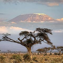 "фото ""Это Африка"""