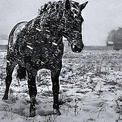 """фото """"Первый снег"""""""