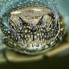 """photo """"Portrait turtle"""""""