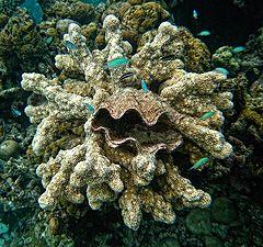 "фото ""Про ракушку и коралл"""