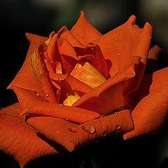 """фотоальбом """"Roses"""""""