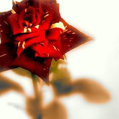 """photo """"rosa"""""""