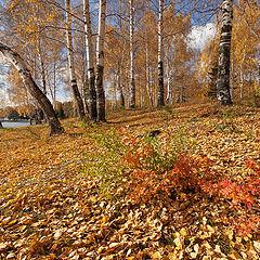"""фото """"Осень / 0189_0181"""""""