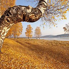 """фото """"Осень / 0189_0220"""""""