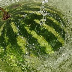 "photo ""Bathing watermelon"""