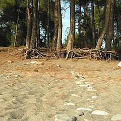 """фото """"Удивительный пляж."""""""