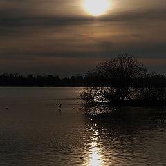 """photo """"Lake """"Damhus soen """" Copenhagen"""""""