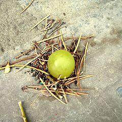 """фото """"Муравьи и виноград"""""""