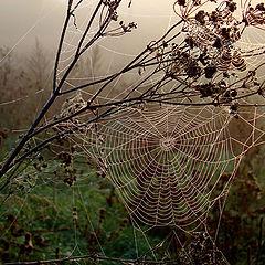 """фото """"Осеннее..."""""""