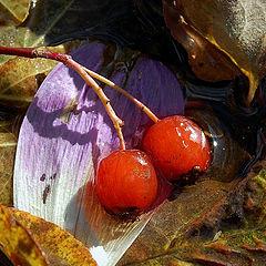 """фото """"Осенние забавки"""""""