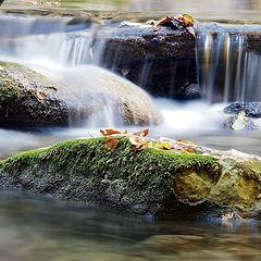 "фото ""молочные реки"""