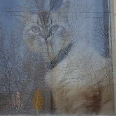 """фото """"за стеклом"""""""