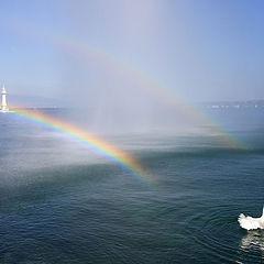 """фото """"Лебедь, радующийся радуге в брызгах фонтана"""""""